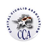 CCA 3.5&amp;quot; Button (100 pack)