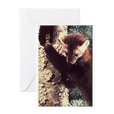 Pine Marten Photo Greeting Card
