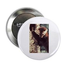 "Pine Marten Photo 2.25"" Button (10 pack)"