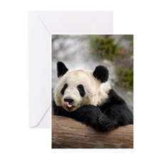 Panda Bear Greeting Cards (Pk of 20)
