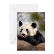 Panda Bear Greeting Card