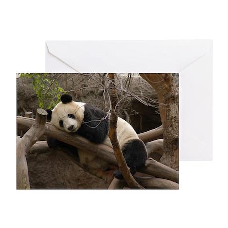 Panda Bear Greeting Cards (Pk of 20)