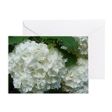 Unique Hydrangea Greeting Card