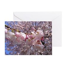 Unique Cherry blossom in dc Greeting Card