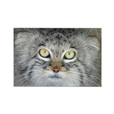 Pallas Cat Rectangle Magnet
