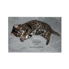Fishing Cat Kitten Rectangle Magnet