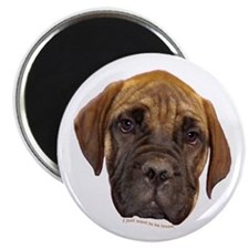 "Bullmastiff Puppy 2.25"" Magnet (100 pack)"
