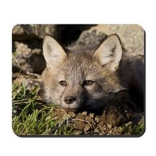 Cross Fox Kit Mousepad