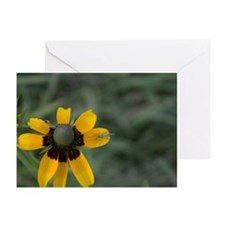 Black-eyed Susan with Insect Greeting Cards (Pk of