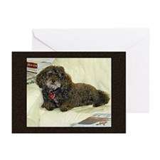 Chocolate Poodle greeting card blank/bx10