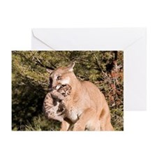 Cougar Greeting Cards (Pk of 20)