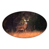 Whitetail Deer Oval Sticker (50 pk)