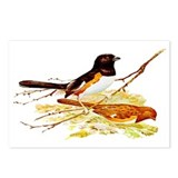 Towhee Postcards (Package of 8)