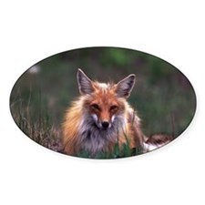 Red Fox Oval Sticker (50 pk)