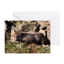 Cross Fox Kit Greeting Cards (Pk of 20)