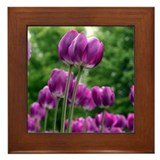 Unique Tulips Framed Tile