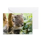 Koala Bear Greeting Card
