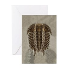 Trilobite Fossil Greeting Card