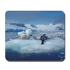 Sunny Seals Mousepad