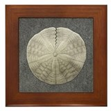 Sand Dollar #1 Framed Tile