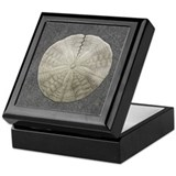 Sand Dollar #1 Keepsake Box
