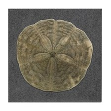 Sand Dollar #2 Tile Coaster