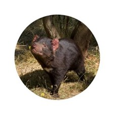 "Tasmanian Devil 3.5"" Button (100 pack)"