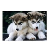 The Huskies Postcards (Package of 8)