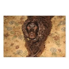 Cute Boykin spaniel Postcards (Package of 8)