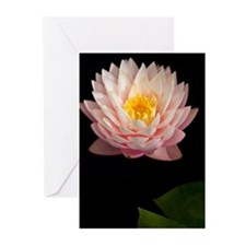 Pink Waterlily Greeting Cards (Pk of 10)