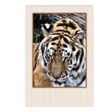 ...Tiger 2... Postcards (Package of 8)