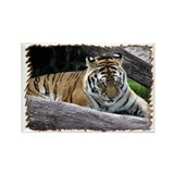 ...Tiger 3... Rectangle Magnet