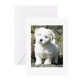 Cute Havanese puppies Greeting Cards (Pk of 20)