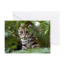 Bengal Cat Greeting Cards (Pk of 20)