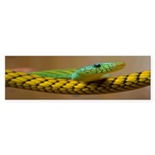 Green Mamba Snake Bumper Sticker (10 pk)