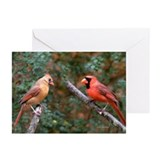 Two Cardinals Greeting Cards (Pk of 20)