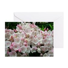 Mountain Laurel Full Bloom Greeting Cards (Pk of 1
