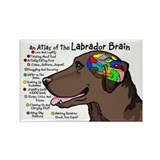 Chocolate Lab Brain Rectangle Magnet