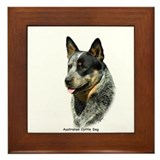 Australian Cattle Dog 9F061D-05 Framed Tile