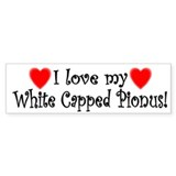 I Love my White Capped Pionus Bumper Bumper Sticker