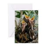 Spring Trumpeters Greeting Card
