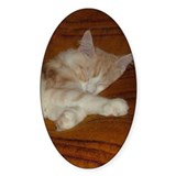 'Pink' Maine Coon Cat Spreadout Oval Decal