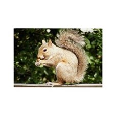 Squirrel Smiling Rectangle Magnet