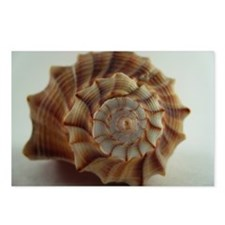 spiral shell Postcards (Package of 8)