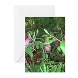 Lady Slipper Greeting Cards (Pk of 10)