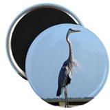Great Blue Heron Magnet