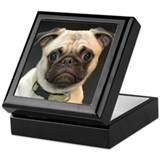 Cute Pug Puppy photo portrait Keepsake Box