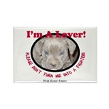 Pit Bull Puppy Anti Dog Fight Rectangle Magnet