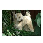 Bailey Beachboy Postcards (Package of 8)