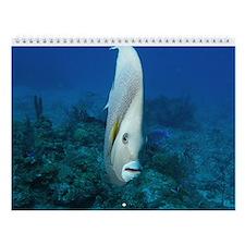 Underwater Images Wall Calendar